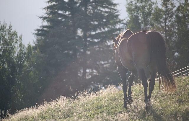 Koń pasący się na polanie