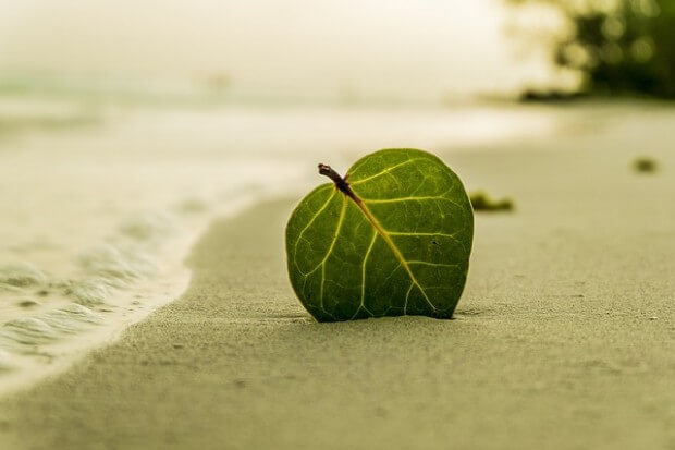 Liść lezy na plaży