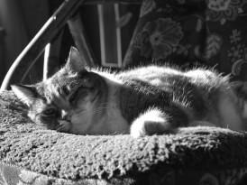 Jak zadbać o zdrowie kota?
